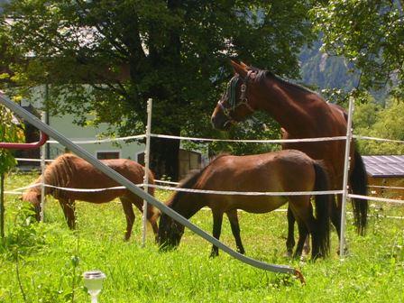 Unsere Pferde als natürlicher Rasenmäher Ponyreiten möglich